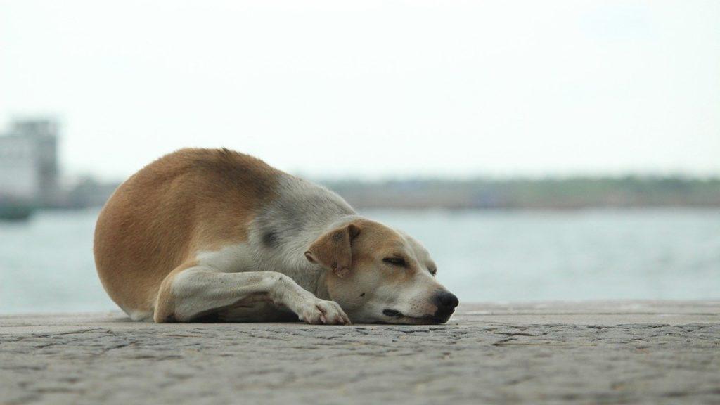 画像に alt 属性が指定されていません。ファイル名: dog-3442165_1280-1024x576.jpg